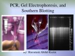 PCR, Gel Electrophoresis, and Southern Blotting