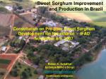 Sweet Sorghum Improvement and Production in Brazil