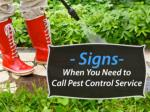 Pest Control Specialist in West Palm Beach – When to Call?